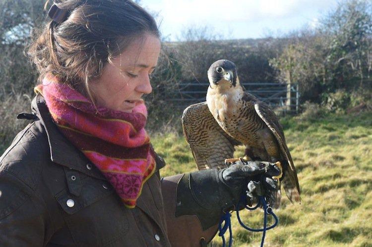 falcon-arm