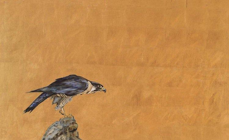 falcon-draw