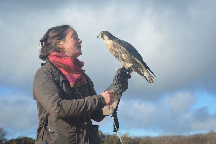 falcon-observe
