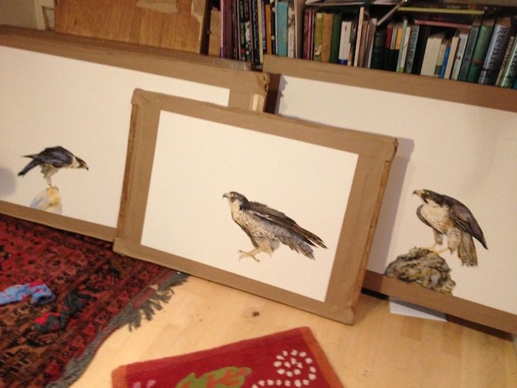 falcon-paintings