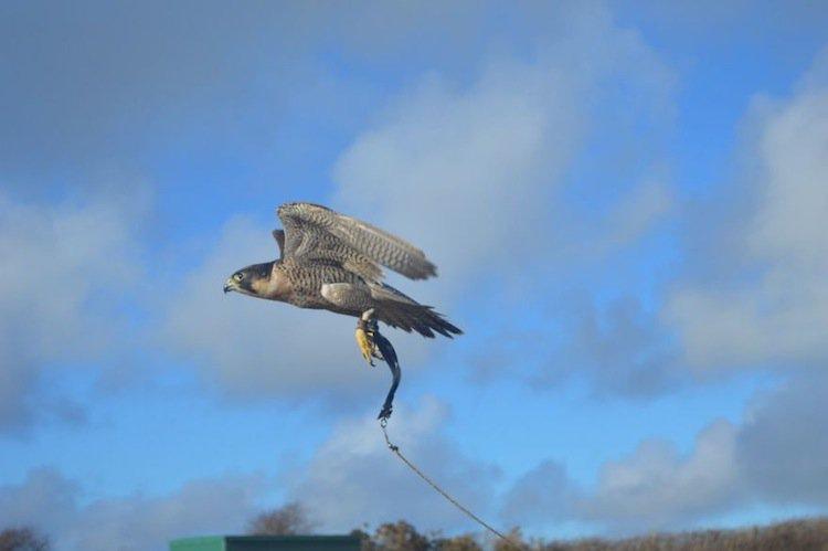 falcon-soar