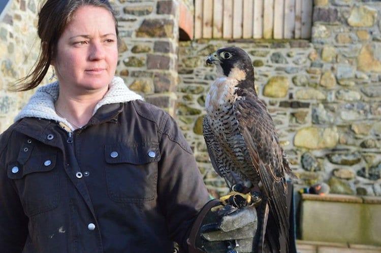 falcon-woman