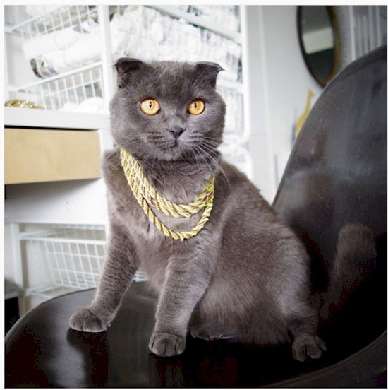 gold chains cat