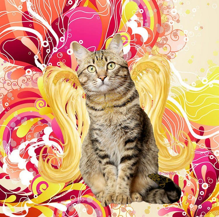 golden wing tabby