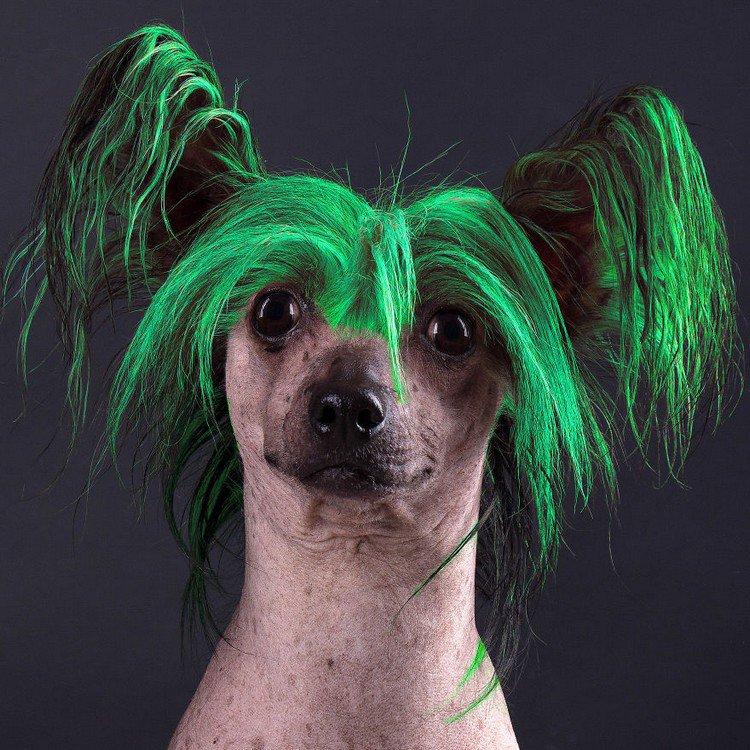 green hair dog