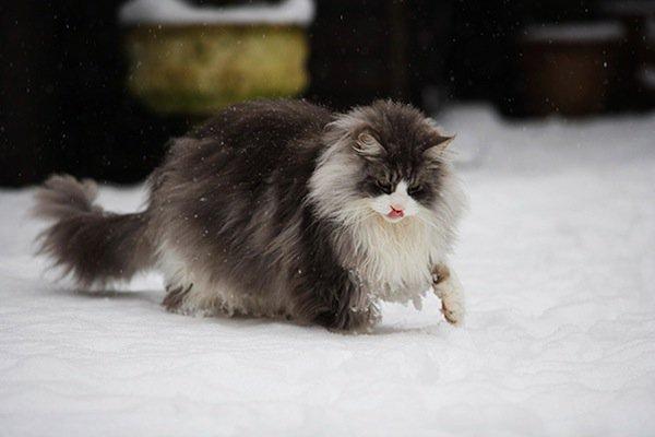 maine-snow