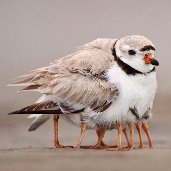 photo-bird