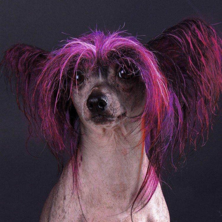 pink hair dog