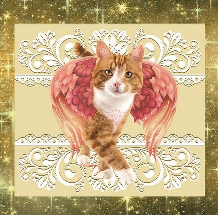 pink wing cat