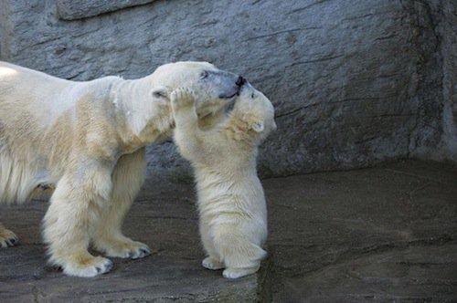 polar-baby