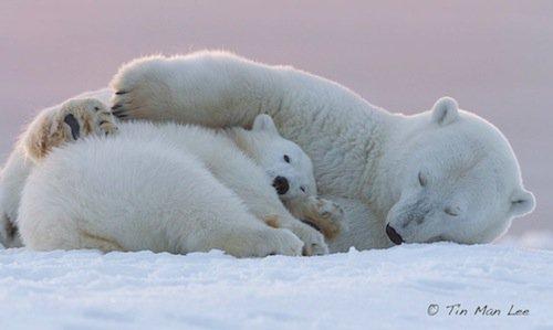 polar-sleep