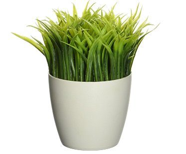 potted pen stand grass