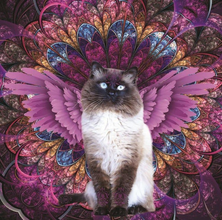 purple wing cat