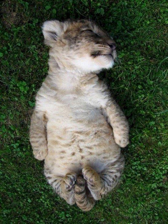 sleeping baby big cat