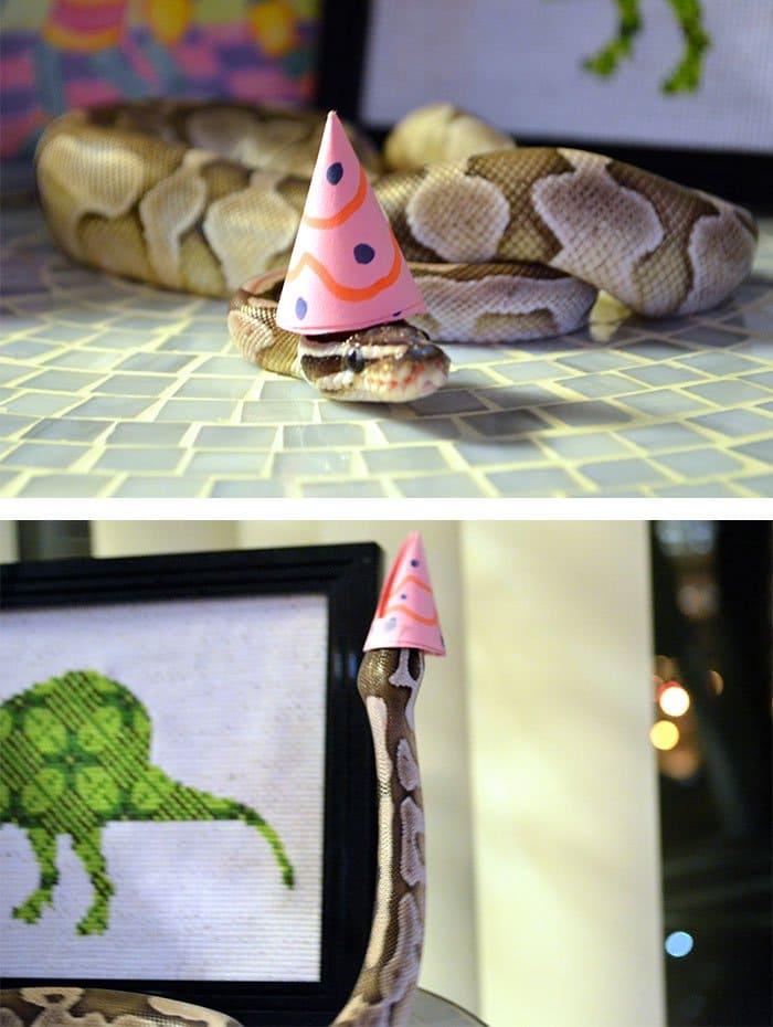 snake-birthday
