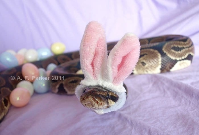 snake-bunny-two