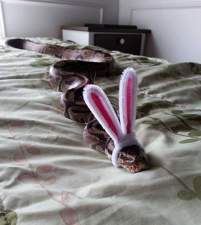 snake-bunny
