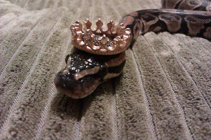 snake-crown