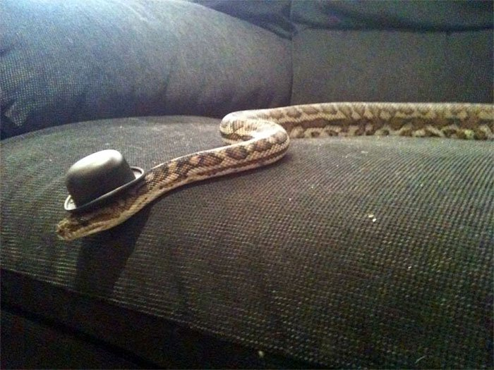 snake-hat