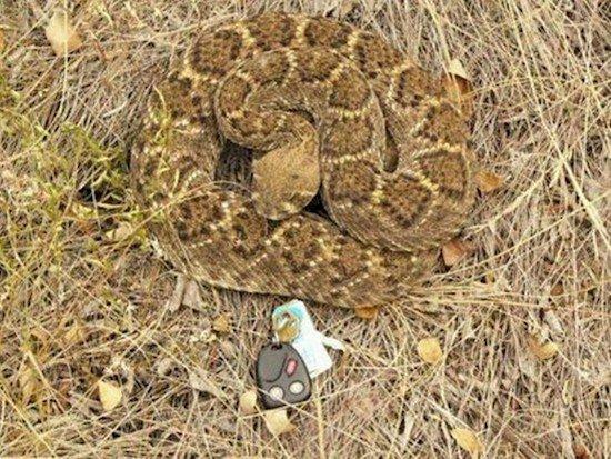 snake keys