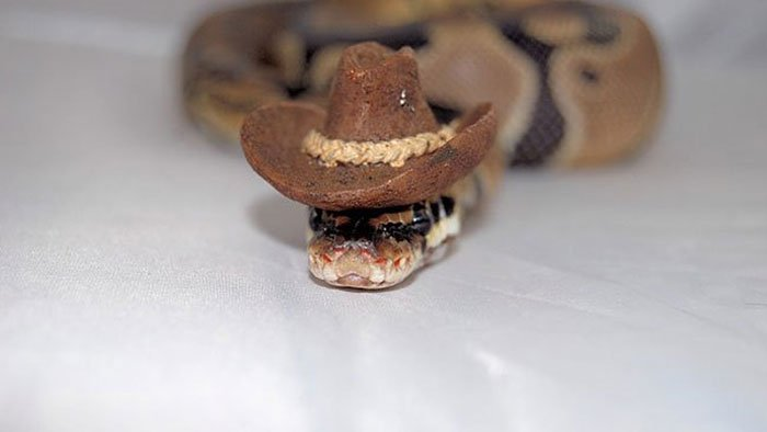 snake-rodeo