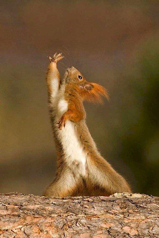squirrel stretch