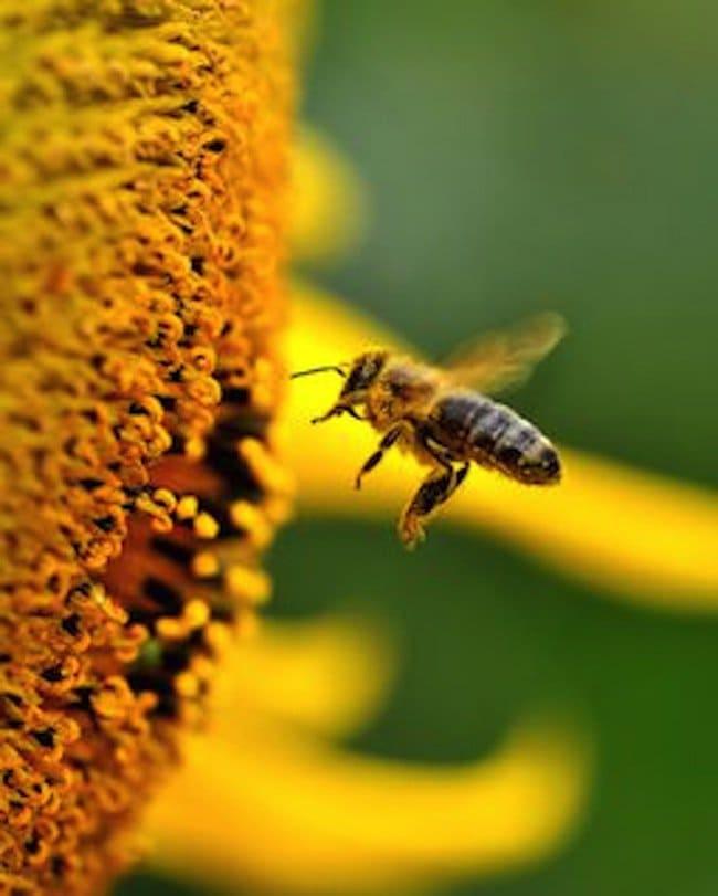 super-pollen