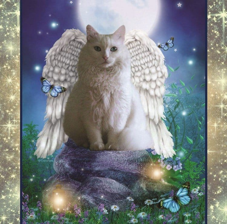white angel cat