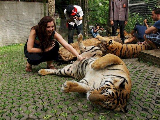 woman petting tigers