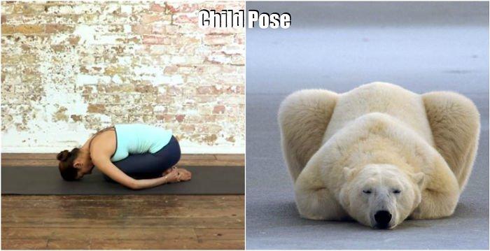 yoga-bear