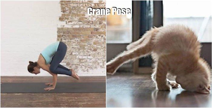 yoga-crane