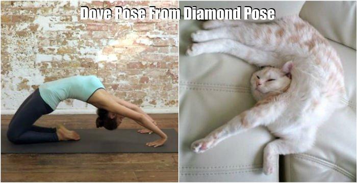 yoga-dia