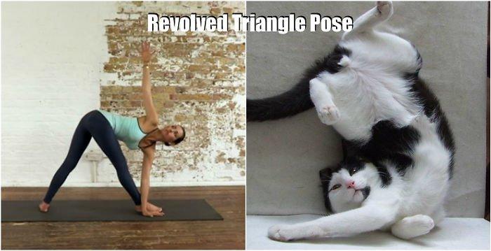 yoga-tri