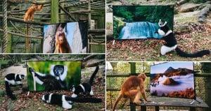 Back To The Wild Animals Sony TVs