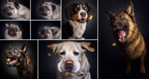 Christian Vieler Dogs Catch Treats