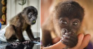 Cristina Olteanu Baby Monkey Cutest Thing