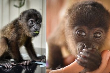 Cristina Olteanu Baby Monkey Cutest Thing