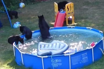 Family Of Bears Pool Party