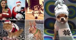 Grumpy Holiday Pets