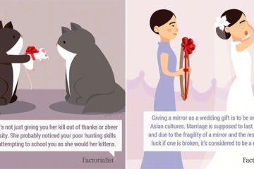 Human And Animal Gift-Giving Customs