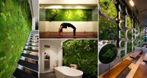 Interior Design Putting Moss On Walls