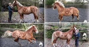 JMC Equestrian Horse Custom Haircut