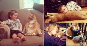 Larry Fat Ginger Cat