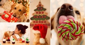 Lisa Adopted Labrador Holidays
