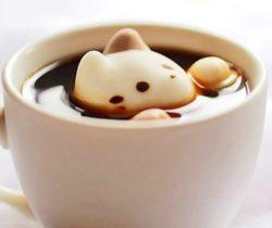 Marshmallow Cats