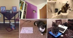 Mischievous Cats Causing TroublE