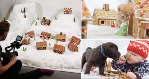 Puppies Babies Kittens Destroying Gingerbread Town