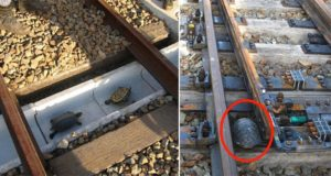 Railway Company Japan Special Tunnels Turtles