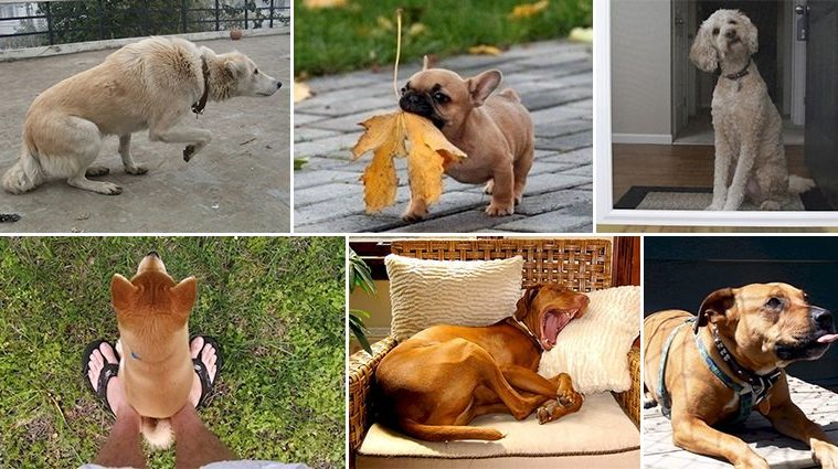 Things Dogs Do Communicate