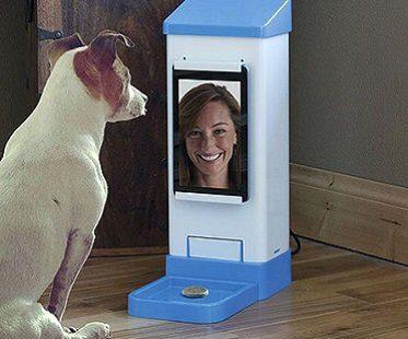 Wifi Pet Treat Dispenser dog home